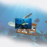 card_tartaruga