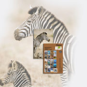 card_zebra
