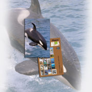orca_card